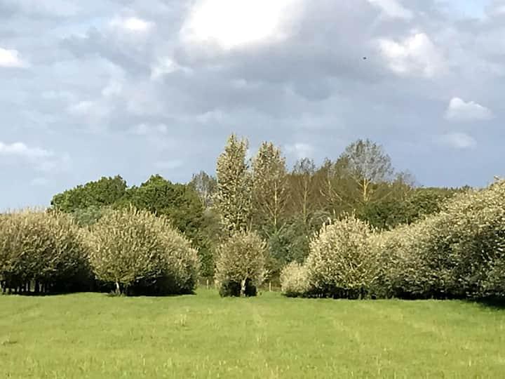 Maisonnette au milieu des pommiers