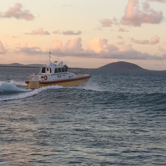 Pilot boat -Mt Coolum in the background