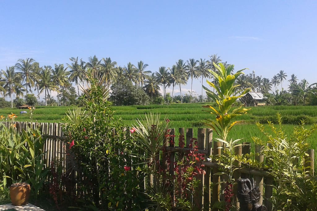 Buddha home stay is surrounding from rice fields