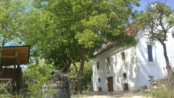 Charmantes Presshaus mit gr. Garten