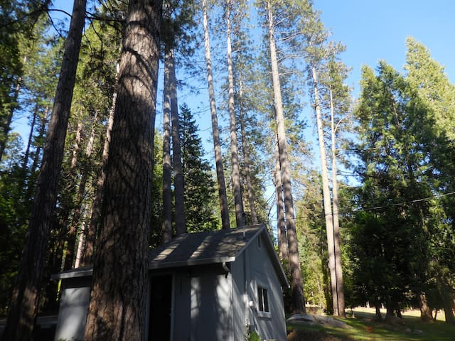 Nevada City Cabin in the Woods