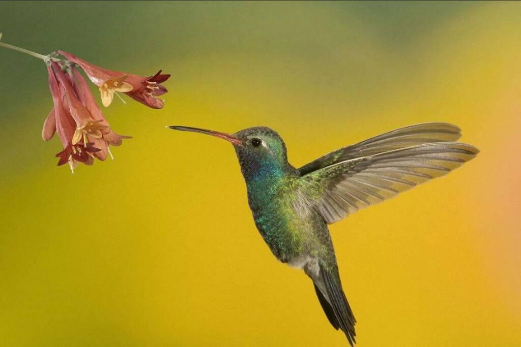 Hummingbird in backyard