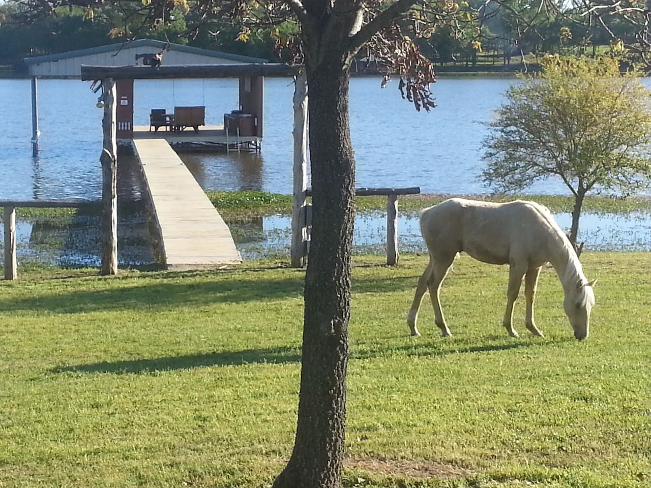 A young foal grazing down by the lake. We are an family horse ranch featuring high bred APHA Paint horses.