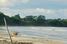 BEACH DOGS APARTMENTS