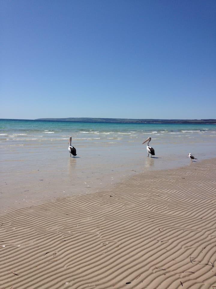 Nautilus - serene location - bush meets beach