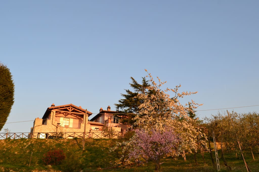 theview of the farmhouse