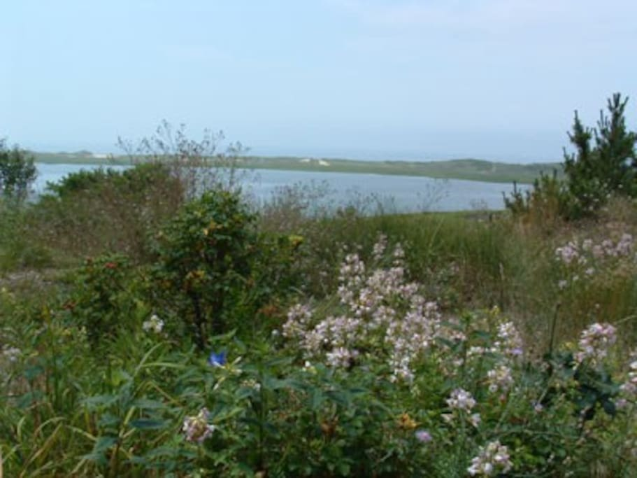 Wildflowers on the bluff over Herring River Cove