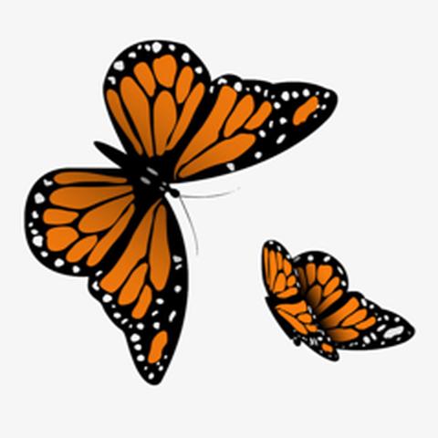 Guía de Recomendaciones Casa Mariposa