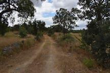Estrada perto da casa/Road near the house