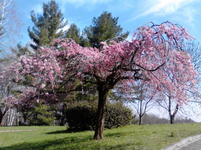 Il Nido sull'Albero rosa - Varese - Flat