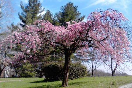 Il Nido sull'Albero rosa - Varese