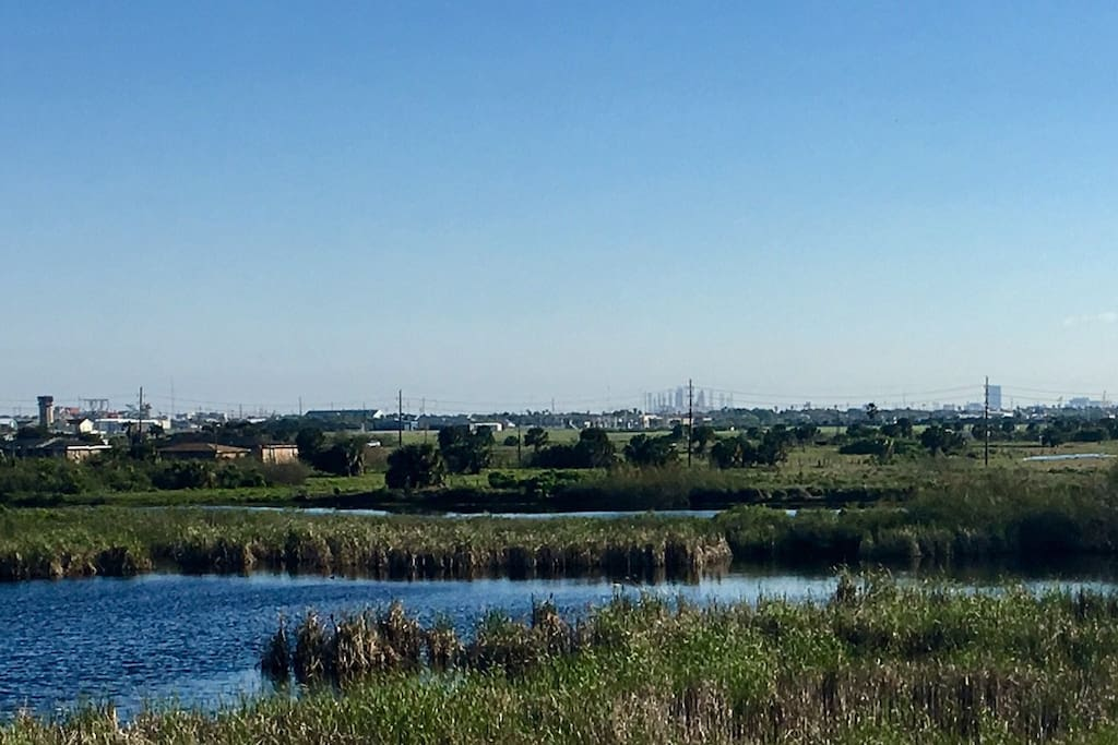 View of the wetland (great for bird watching)