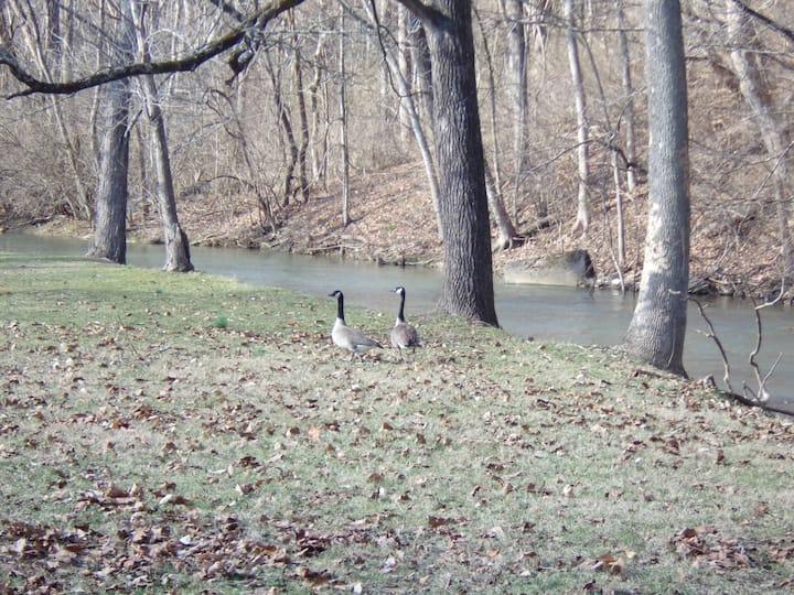 Beaver Creek Retreat