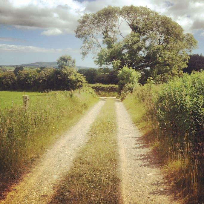 Lane-way at last tree farm