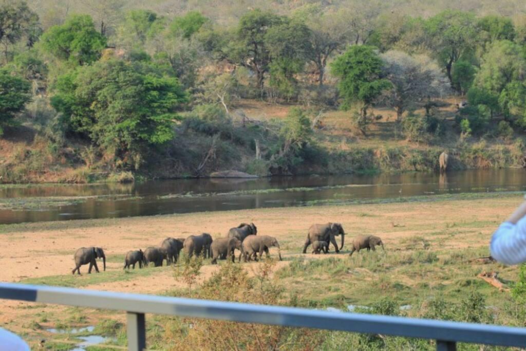 Elephants walking past the house.