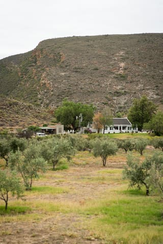 A view of the house from the olive grove.