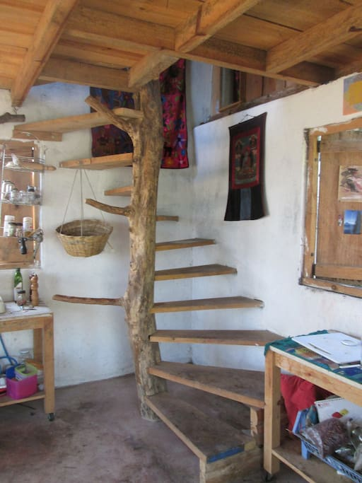 Tree trunk stairs
