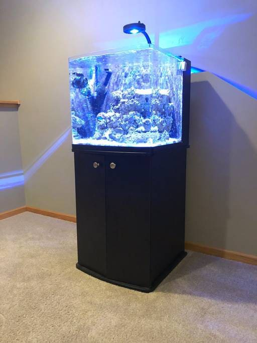 My husbands pride and joy, this custom saltwater aquarium does require some maintenance. (Feeding the fish, or testing water purity.) The aquarium is quiet and incredibly relaxing to watch.