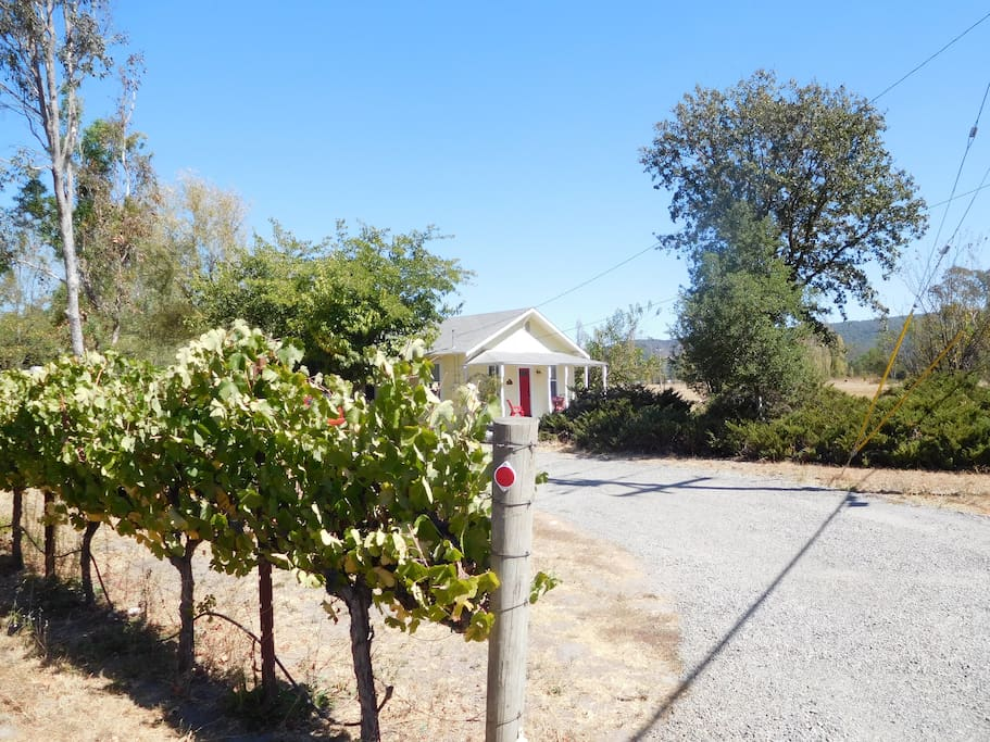 vineyard with bungalow in distance