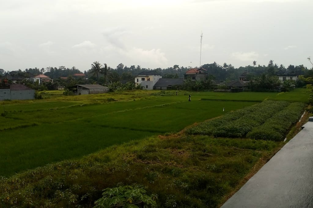 View of rice field from the outside balcony