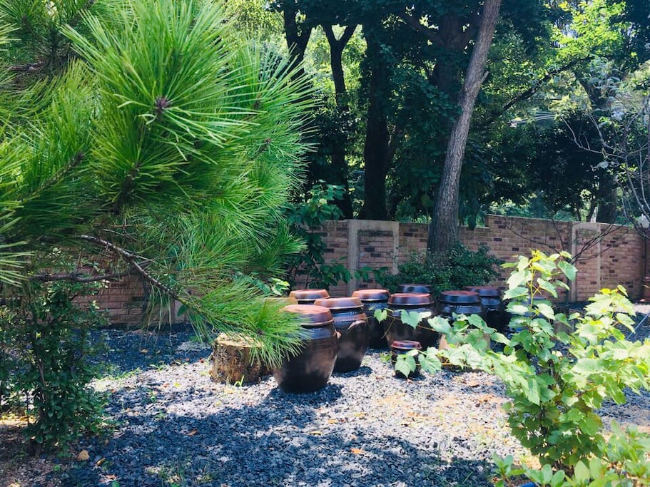 앞마당 거대거대 나무 정원