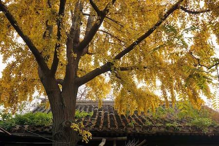 Architects Studio in Courtyard-最美国子监街上的传统老院子 - Beijing