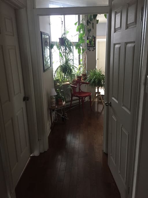 The door to the right is the room available for rent. The door to the right is the bathroom. And the plants lead into the dining room and kitchen.