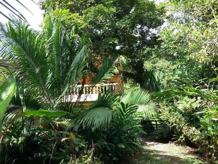 The Zia, Big Creek, Isla Colon  Bocas del Toro