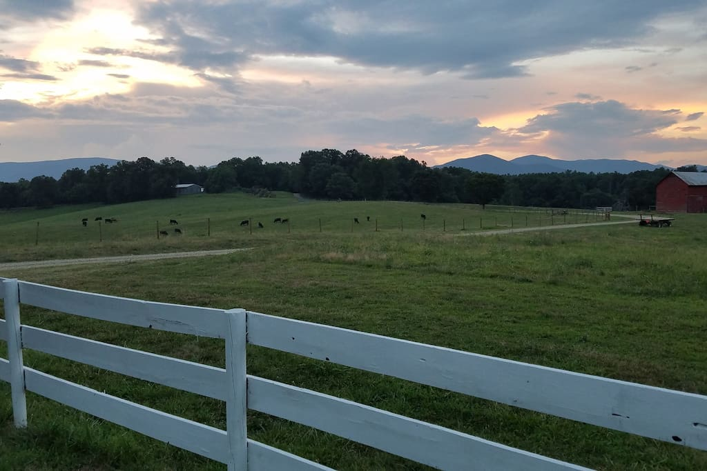 view from yard, cattle pastures and the Blue Ridge