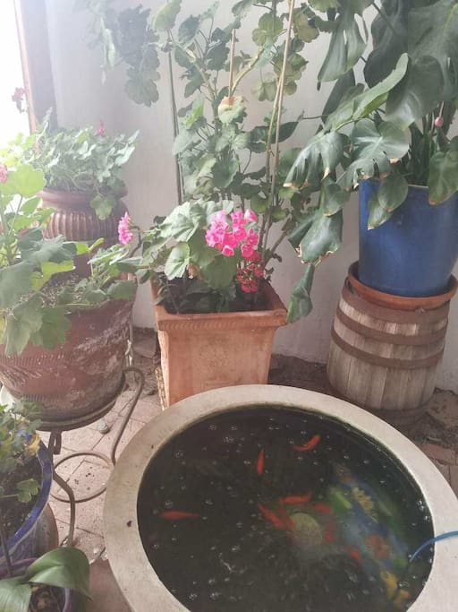 Indoor turtles and fish highlight the plant filled atrium.