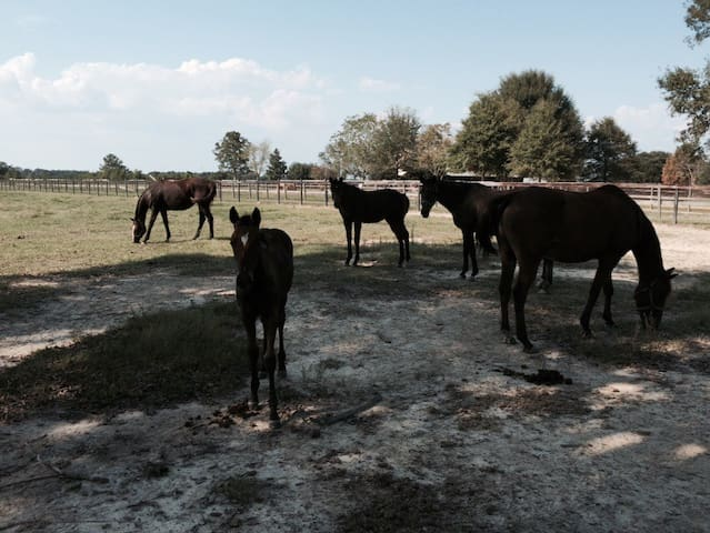 The Mare's Lair~~Country Cottage - Franklinton - Rumah