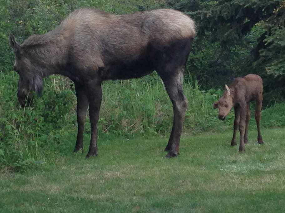 The backyard, with frequent visitors.