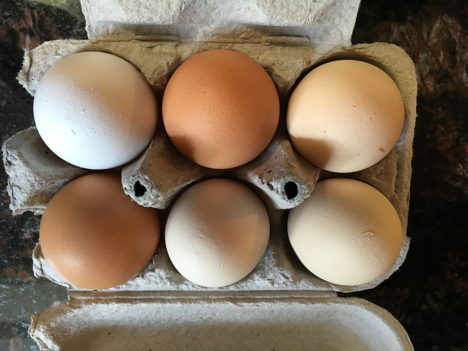 Local eggs, some from our chickens!