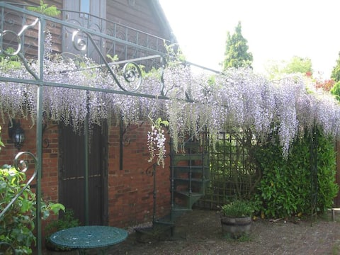 Wisteria over the terrace