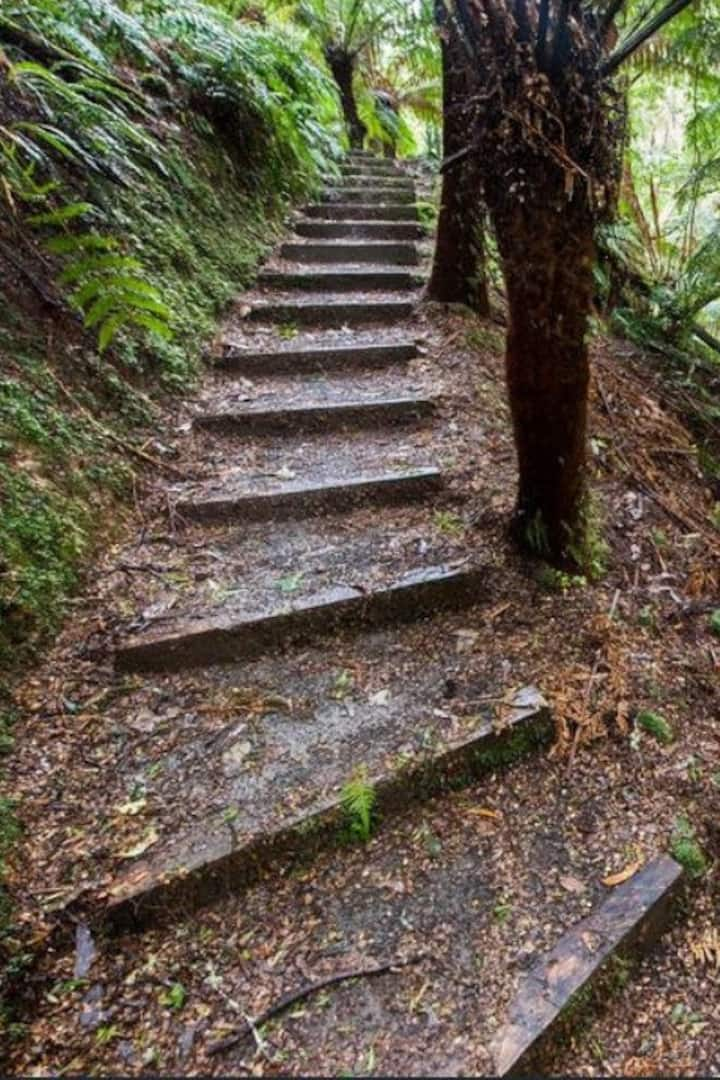 Forest steps leading to the Grotto