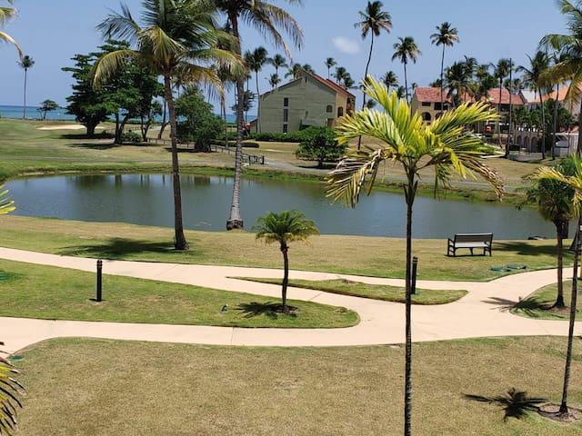 ocean view paradise at palmas doradas.