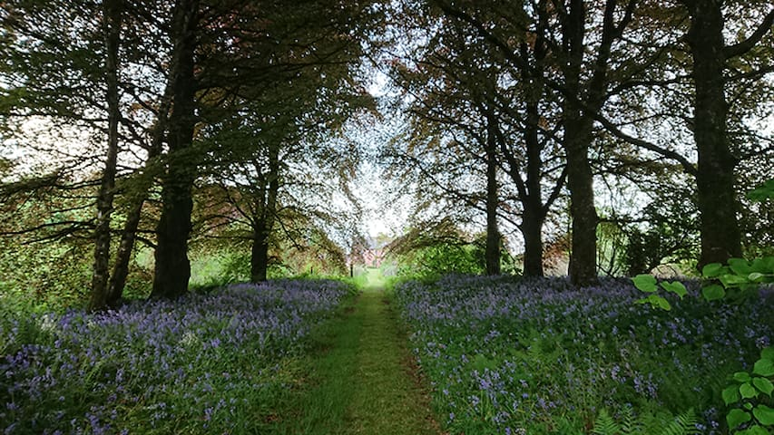 Blue bell walk end of May