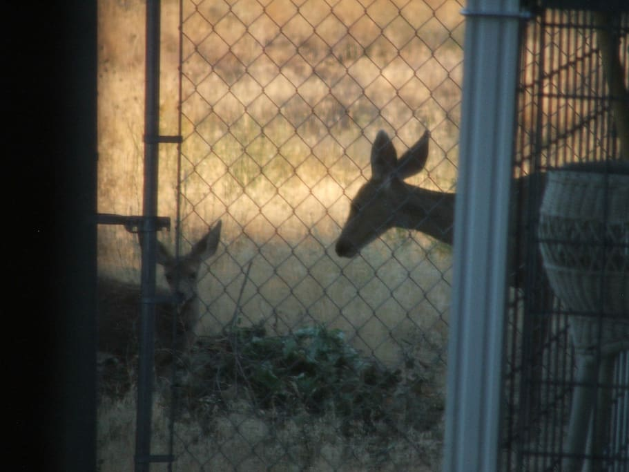 Deer are on property every day