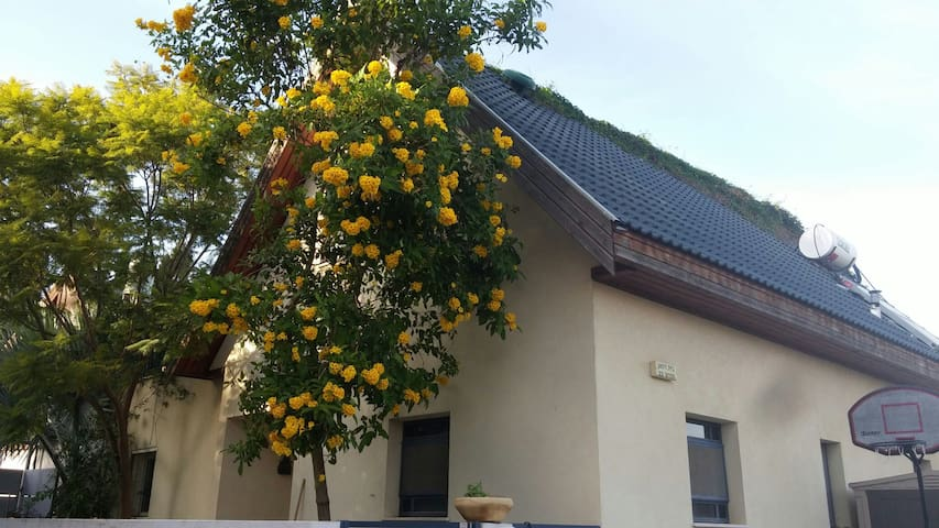 The Clementine tree house - Gedera - Haus