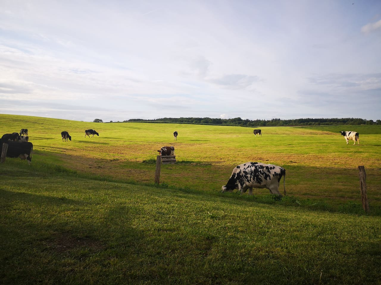 Mögliche Aussicht - Für die Anwesenheit der Kühe kann nicht garantiert werden.