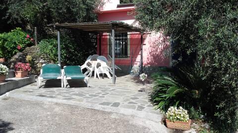 Casetta Antonella Citra-Code 008030-LT-0125