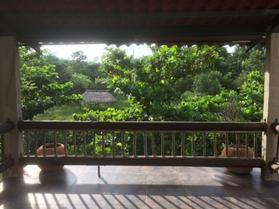 Terraza con  hermosa vista, las guacamayas desayunan en esos árboles