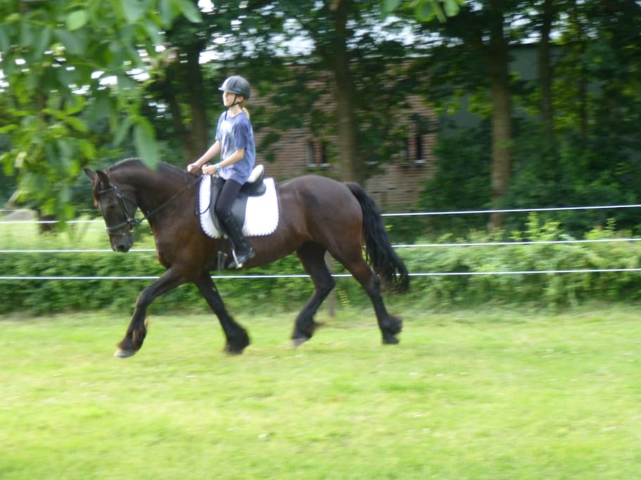 Horse riding in the orchard