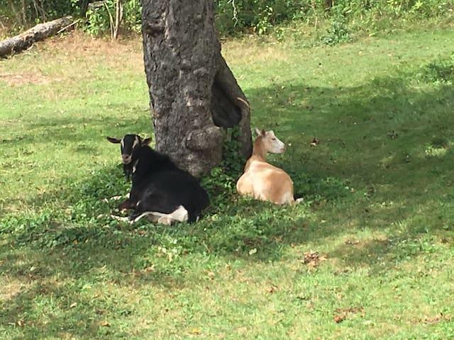 Midcoast Farm Cottage (w/goats, donkey & hot tub)