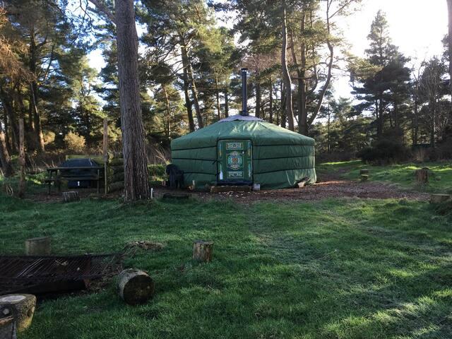 Penbedw Yurt1/N.Wales Sleeps max 6