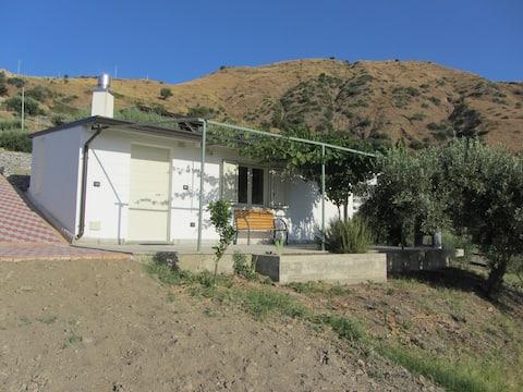 Dom pośród drzew oliwnych.