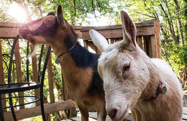 Farmhouse Chic Getaway ft. Goats