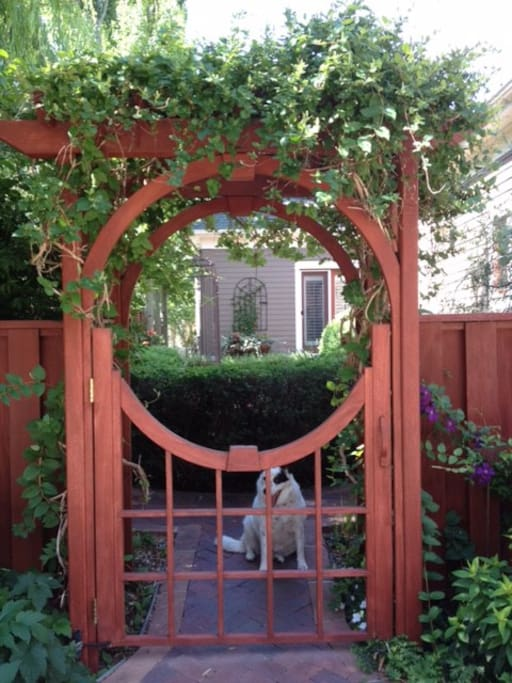 Gate into courtyard (and Spot the house dog)