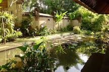 The fishpond
