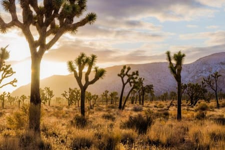 Upgraded RVgetaway~JoshuaTree National landmark AZ